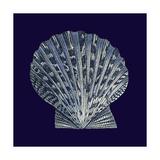 Indigo Shells VIII Kunstdruck von  Vision Studio