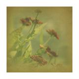 Filtered Dreams III Prints by Jennifer Jorgensen