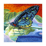 Poised Butterfly II Prints by Carolee Vitaletti