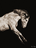 Horse Portrait IV Photographic Print by David Drost