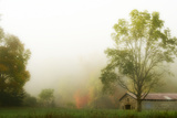 Fog at the Farm Photographic Print by Danny Head