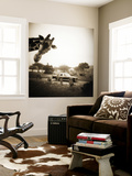 Giraffe and Friends Falcon Ridge Texas Wall Mural by Theo Westenberger