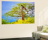 Giraffe 'S Head Standing Out From The Bush. Safari In Tsavo West, Kenya, Africa Wall Mural by PHOTOCREO Michal Bednarek