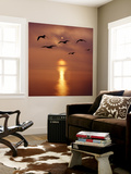 Sunrise over the Sea with Seagulls, UK Wall Mural by Mark Taylor