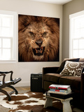Close-Up Shot Of Roaring Lion Wall Mural by NejroN Photo