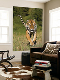 Tiger Run Wall Mural by Susann Parker