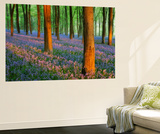 Carpet of Bluebells (Endymion Nonscriptus) in Beech (Fagus Sylvatica) Woodland at Dawn, UK Wall Mural by Guy Edwardes