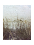 Through the Dunes II Prints by Pam Ilosky