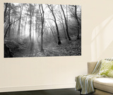 Autumn Forest With Fog And Lights Wall Mural by  udvarhazi