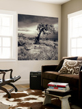 Mystery Tree at Dead Horse Point Wall Mural by Vincent James