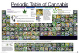 Periodic Table Of Cannabis Posters