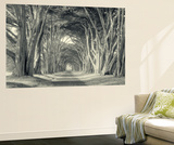 Cypress Tree Road, Point Reyes Wall Mural by Vincent James