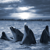 The Bottle-Nosed Dolphins In Sunset Light Wall Mural by  sad444