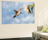 Dreamy Image Of A Hummingbird Feeding On A Pale Pink Hibiscus Flower Wall Mural by Sari ONeal