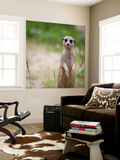 Watchful Meerkat Standing Guard Wall Mural by  l i g h t p o e t