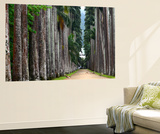 The Palm Alley In The Botanical Garden In Rio De Janeiro Wall Mural by  xura