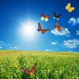 Butterfly Spring Field. A Group O Colorful Butterflies In The Spring Summer Grass Land Wall Mural by PHOTOCREO Michal Bednarek