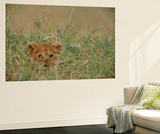 An African Lion (Panthera Leo) Cub Peers At the Camera Through the Grass Wall Mural by Michael Nichols