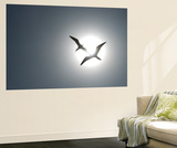 Magnificent Frigatebirds in Flight over Isla Iguana Wall Mural by Michael Melford