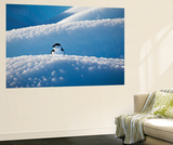 A Chinstrap Penguin, Pygoscelis Antarctica, on a Pebbly-Surfaced Iceberg Wall Mural by Ira Meyer