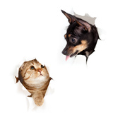 Cat And Dog In Paper Side Torn Hole Isolated Wall Mural – Large by  Andrey_Kuzmin