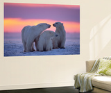 Polar Bear With Yearling Cubs Wall Mural by  outdoorsman
