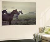 Wild Horses Wall Mural by  conrado