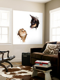 Cat And Dog In Paper Side Torn Hole Isolated Wall Mural by  Andrey_Kuzmin