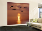 Sunrise over the Sea with Seagulls, UK Wall Mural – Large by Mark Taylor