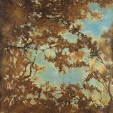Tree Canopy Posters by Liz Jardine