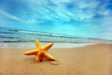 Starfish on the Beach Wall Mural – Large by PHOTOCREO Michal Bednarek