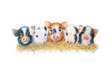Five Little Pigs, 2012 Giclee Print by Sandra Moore
