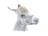 Little Donkey II, 2014 Giclee Print by Sandra Moore