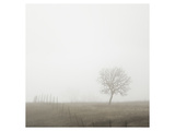 Tree and Fence II Posters av Shane Settle