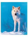 Montana Wolf Print
