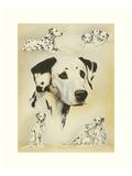 Dalmatian Posters by Libero Patrignani