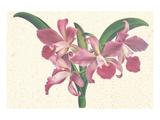 Pink Amaryllis Posters