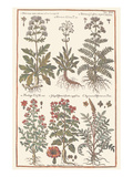 Herbs Prints