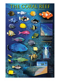 The Coral Reef Poster