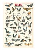 Bats Print