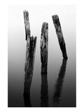 Four Pier Pilings Posters by Shane Settle