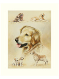 Golden Retriever Print by Libero Patrignani