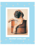 Bucket Dweller Poster by Rachael Hale