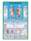 Het menselijk lichaam Schilderijen