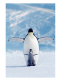 Penguin and Chick Prints