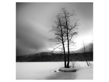 Lake of Woods Tree I Prints by Shane Settle
