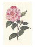 Pink Flower Prints