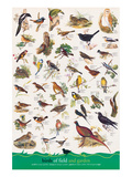 Birds of Fields and Gardens Poster