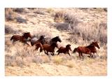 Mustang Horses Running, Wyoming Poster