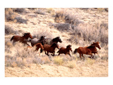 Mustang Horses Running, Wyoming Posters